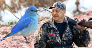 Noktara - Ausgezwitschert- Erdogan eröffnet Jagd auf blaue Vogelart