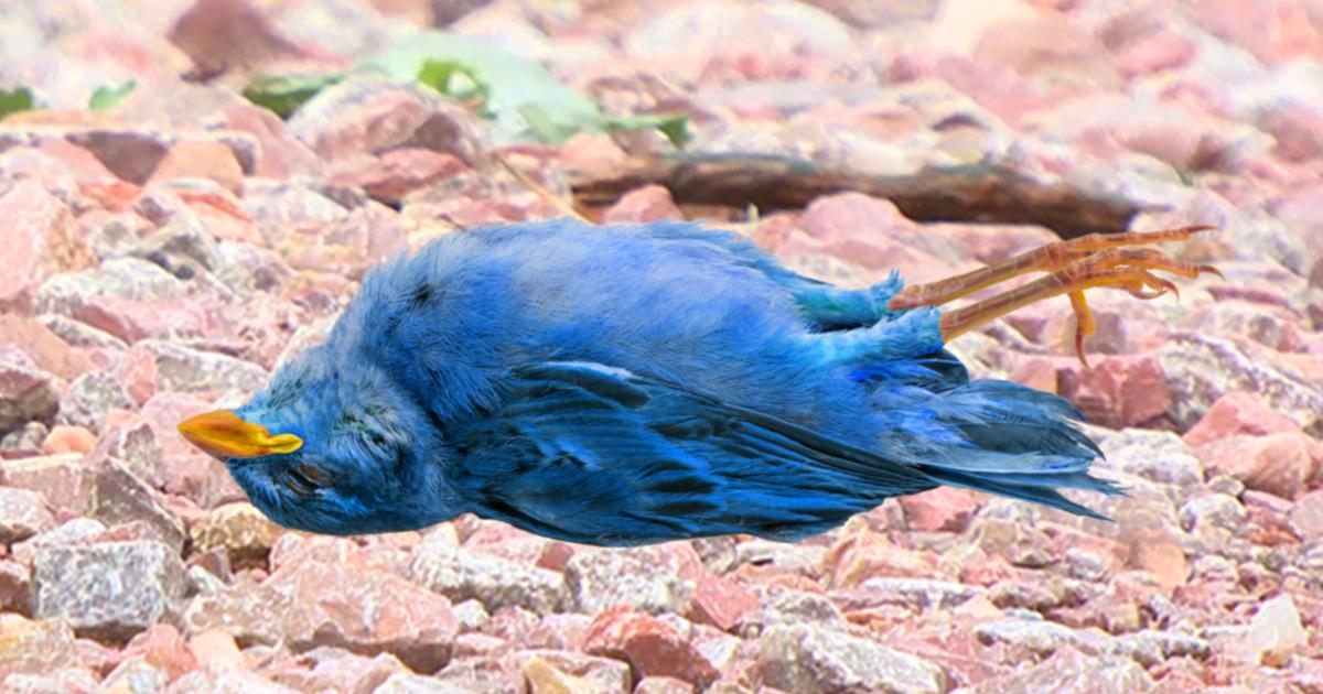 Noktara - Ausgezwitschert- Erdogan eröffnet Jagd auf blaue Vogelart - Twitter down