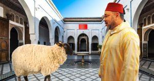 Noktara - Begnadigung - König von Marokko verschont Schafe zum Opferfest