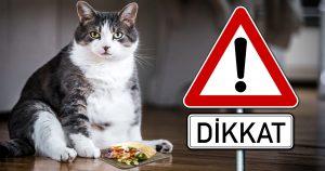 Noktara - Dikkat - Türkischer Tierhalter füttert Katze mit Dönerfleisch