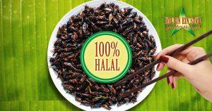 Noktara - Dschungelcamp 2019 - Halal-Heuschrecken für muslimische Kandidaten
