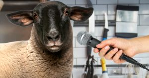 Noktara - Exklusivinterview mit einem Schaf über das Opferfest