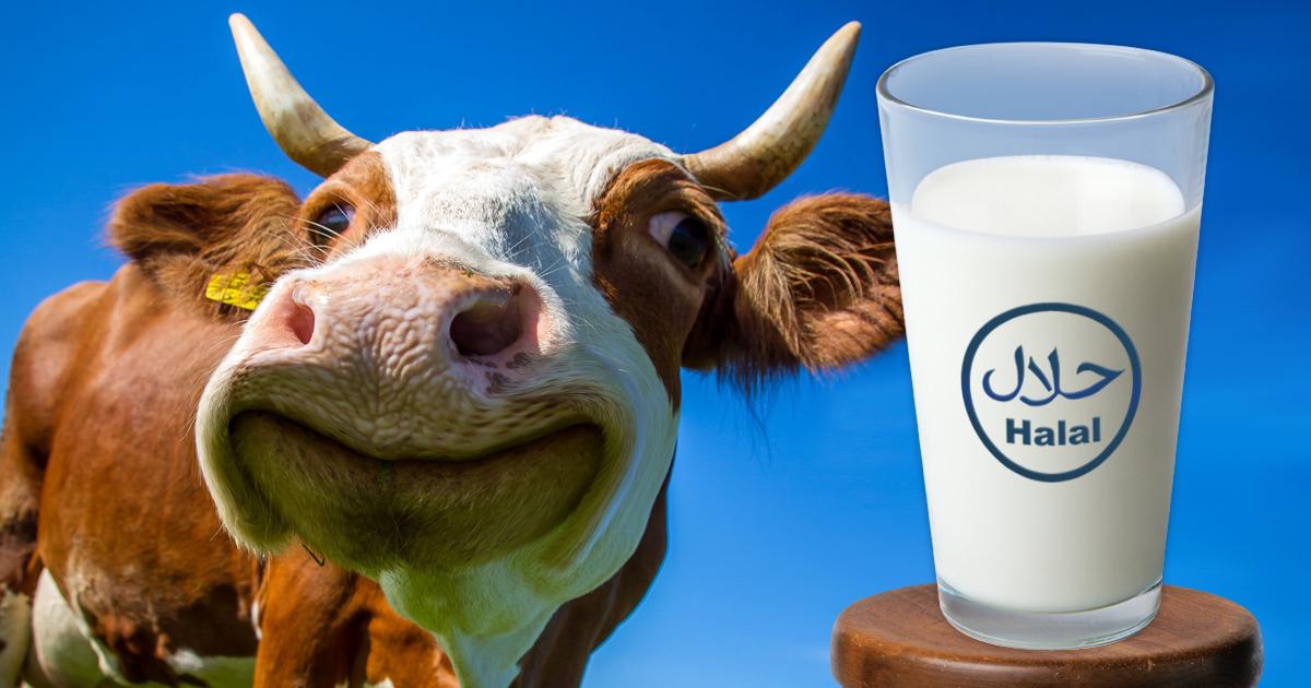 Noktara - Halal Milch - Jetzt ohne Vergewaltigung von Kühen