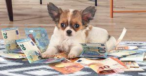 Noktara - Hundegeld- Kindergeld wird auf kinderlose Hundehalter ausgeweitet