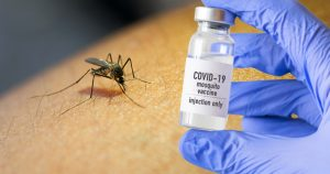 Noktara - Impfmücken- Bundesregierung züchtet Stechmücken für Corona-Impfung
