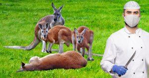 Noktara - Känguru-Kurban - Australische Muslime opfern hüpfendes Halal-Fleisch
