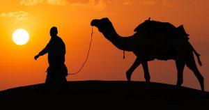 Noktara - Kamel entlaufen, weil Mann auf Gebete vertraute, anstelle es festzubinden