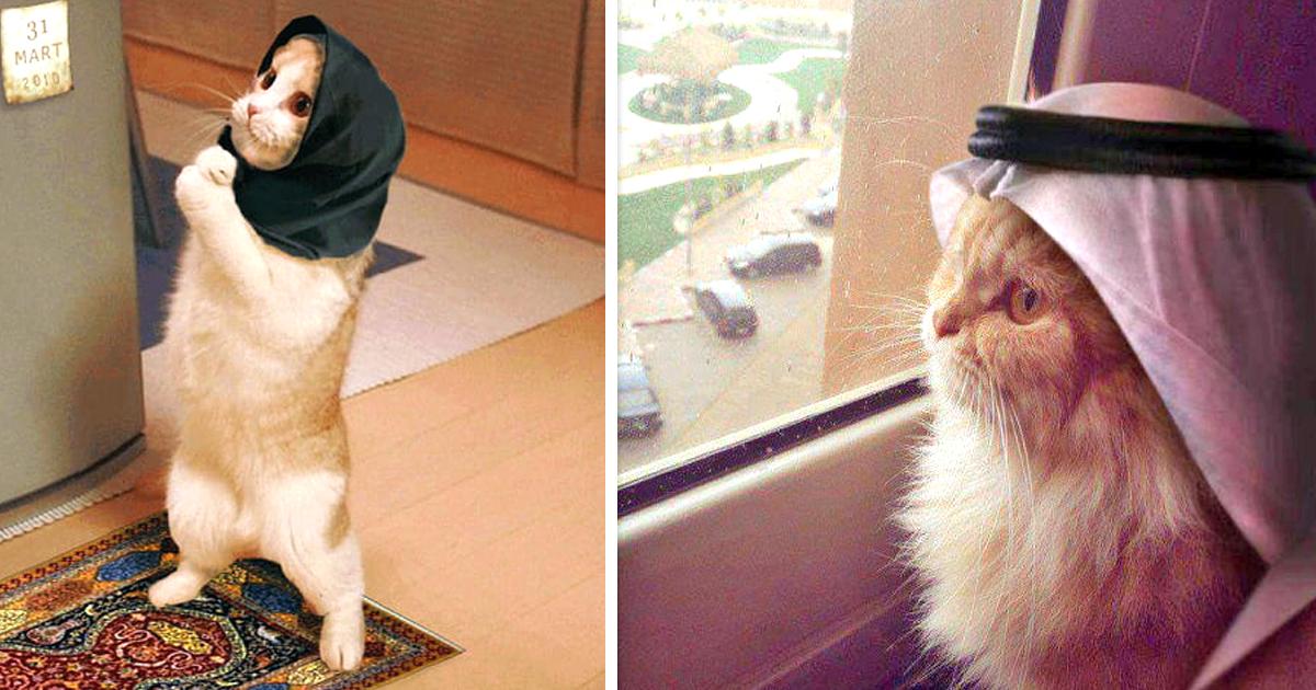 Noktara - Katzen im Islam - 10 Beweise dafür, dass Katzen Muslime sind