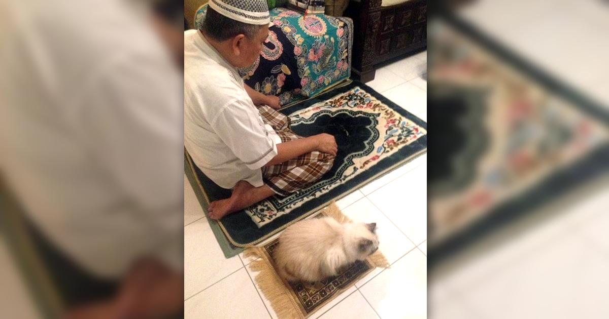 Noktara - Katzen im Islam - Beweise dafür, dass Katzen Muslime sind - Gebet
