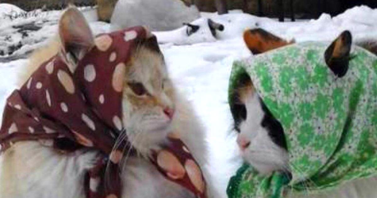 Noktara - Katzen im Islam - Beweise dafür, dass Katzen Muslime sind - Kopftuch