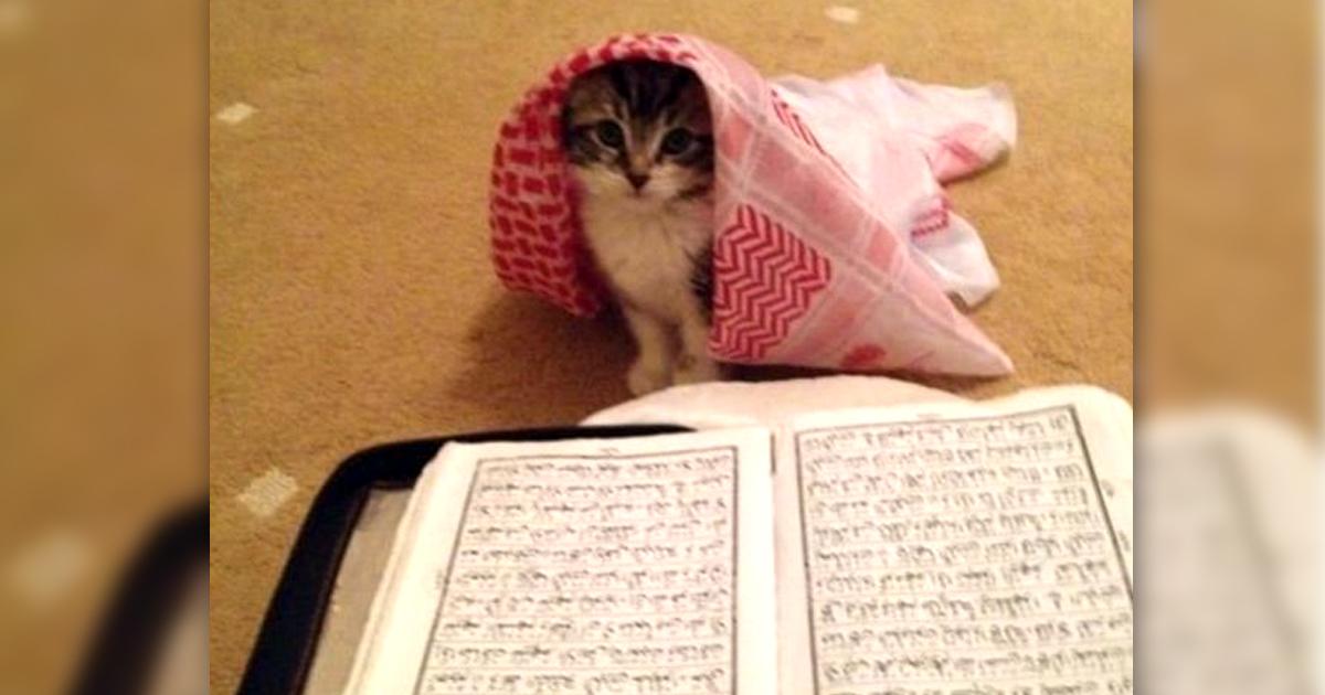 Noktara - Katzen im Islam - Beweise dafür, dass Katzen Muslime sind - Koran