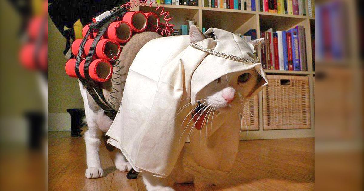 Noktara - Katzen im Islam - Beweise dafür, dass Katzen Muslime sind - Terror