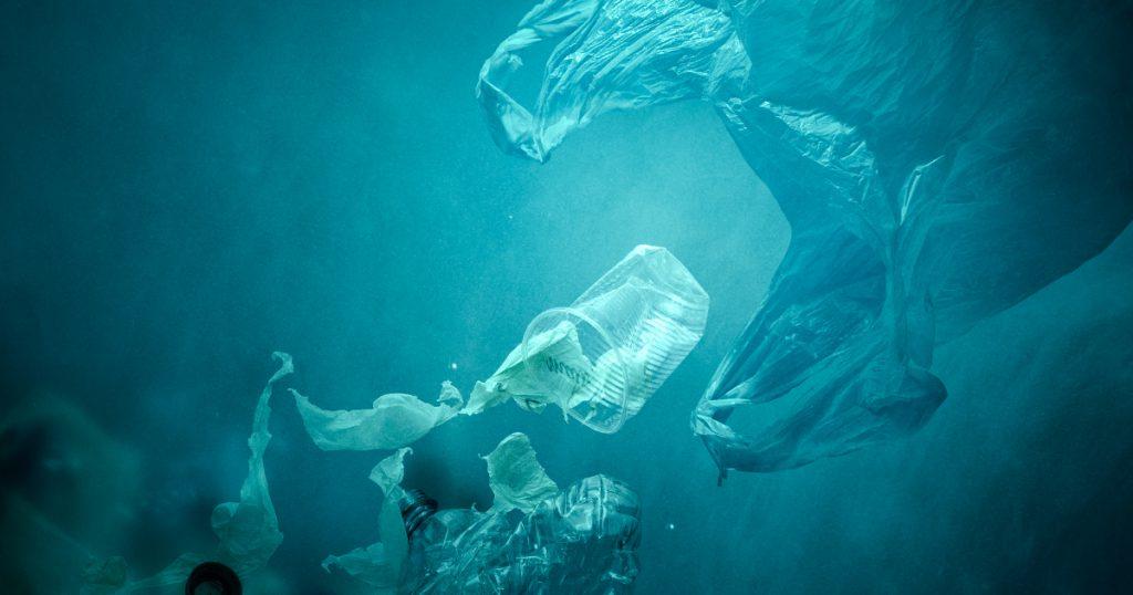 Noktara - Meeresbiologen erklären Plastiktüten im Ozean zu neuer Quallenart - Nahrungsaufnahme