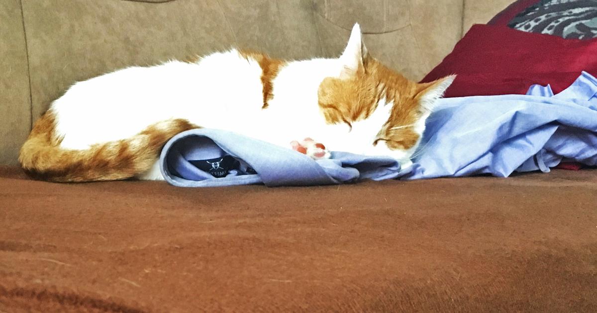 Katze verhindert Moscheebesuch durch Nickerchen