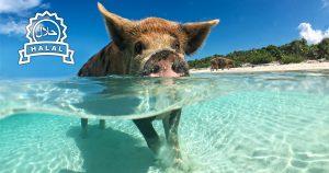 Noktara - Muslim schmeißt Schweine ins Meer, damit sie halal werden