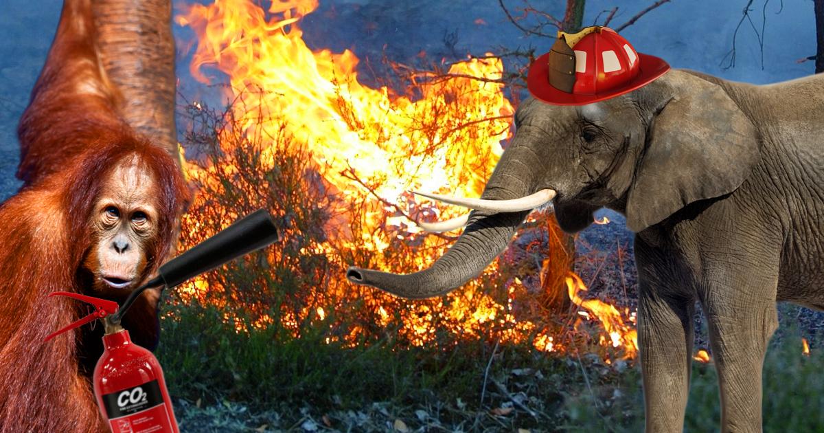 Noktara - Verzweifelte Tiere fangen an brennenden Regenwald selbst zu löschen